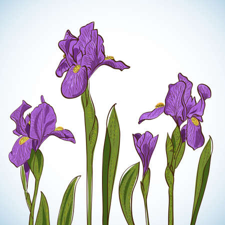 violet iris flower isolated on white background Vector