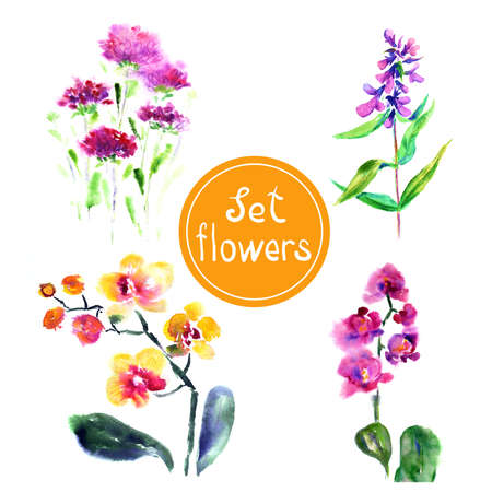 Set of flowers  Painted in watercolor  photo