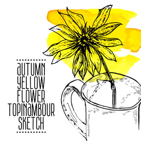 highly detailed hand drawn yellow flower Jerusalem artichoke in a cup sketch, watercolor, ink. Vector