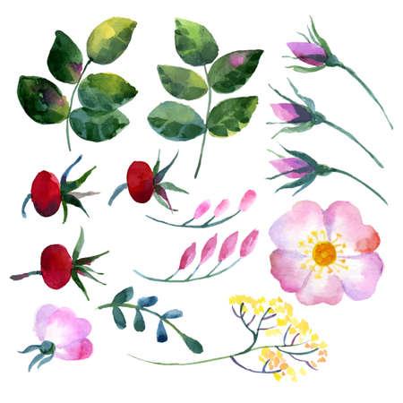 Set of watercolor elements rosehip Vector