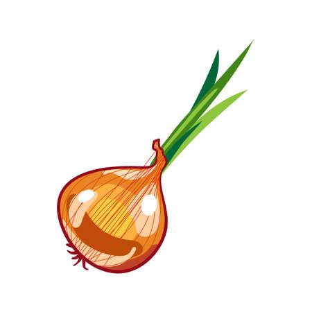 Vector fresh brown onions on white. Vector illustration. Illustration