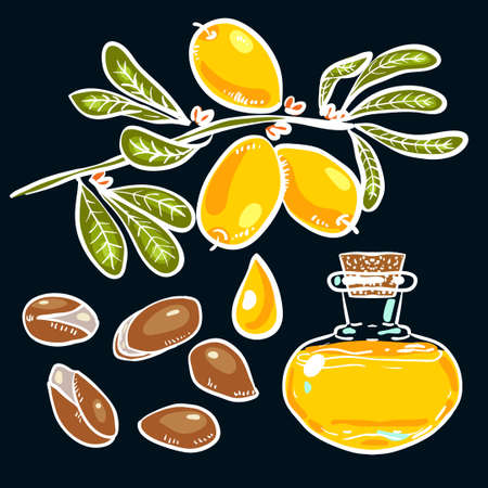 ironwood: Set of isolated branches, leaves, nuts, fruits, argan tree (ironwood). Suitable for packing Argan oil creams. Vector illustration of a hand drawn style