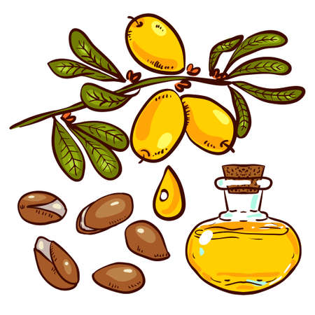 anti age: Set of isolated branches, leaves, nuts, fruits, argan tree (ironwood). Suitable for packing Argan oil creams. Vector illustration of a hand drawn style