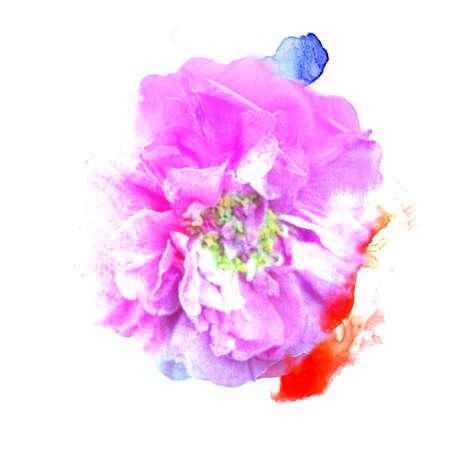 cartoline vittoriane: Print flower of a wild rose watercolor style. Archivio Fotografico