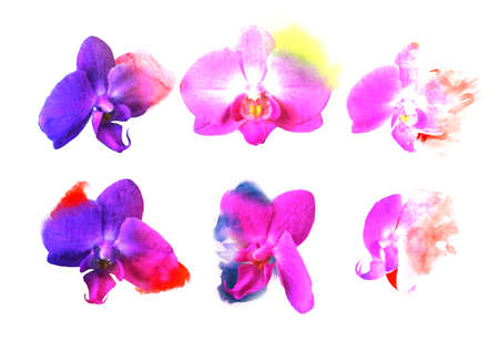 Set orchid flowers. Watercolor buds