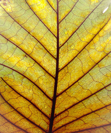 detail: texture of brown leaf Stock Photo