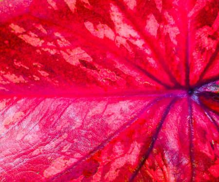 grid: Red leaf texture background