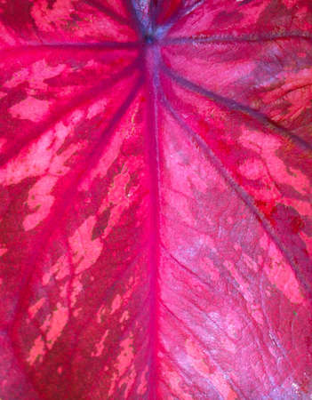 detail: closeup Red botany texture