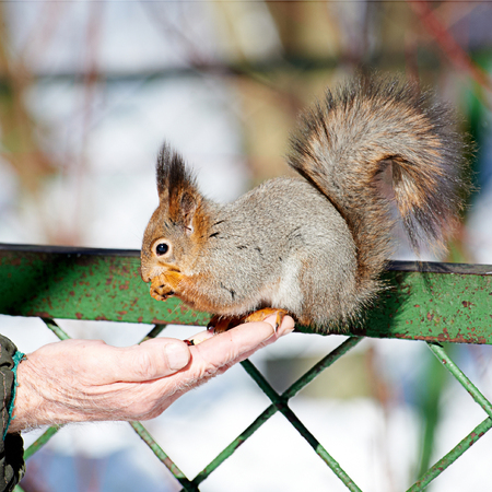 Little squirrel eats from hand photo