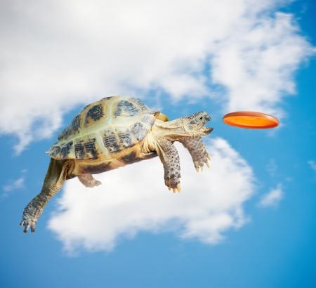 Schildpad springt en vangt de vliegende schijf