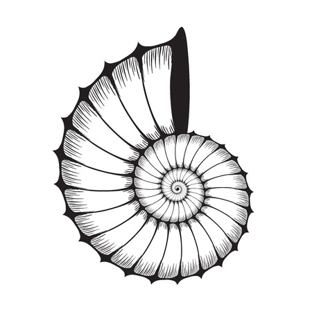 Sea shell clam silhouette on white Illustration