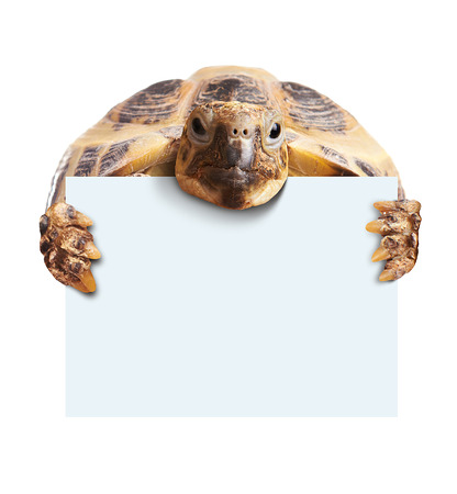 animal picture: Cute turtle holding  a blank white board isolated on white