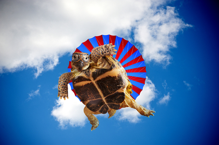 Turtle jumping with a parachute photo