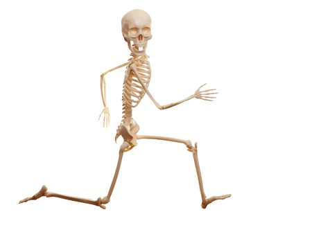 Skeleton running isolated on the white background. Looking at camera.