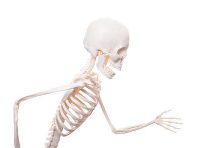 Skeleton running isolated on the white background. Stock Photo