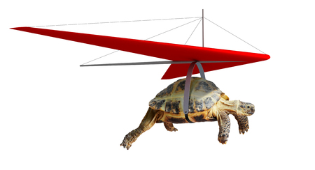 Funny turtle flying on hang-glider