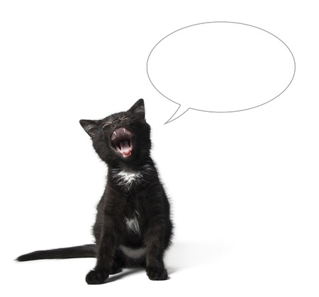 Cute cat and empty buble talk on white background