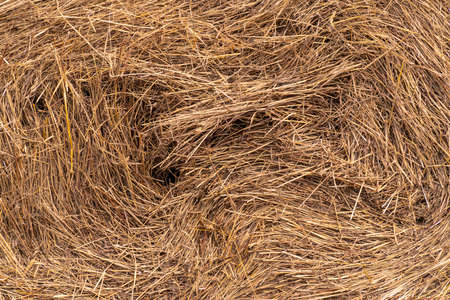 Close-up of a twisted stack of straw. Photo with cattle-breeding farm.