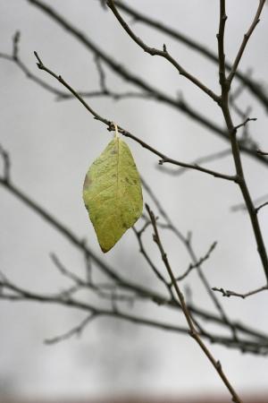 twing: Lonely leaf on twig tree