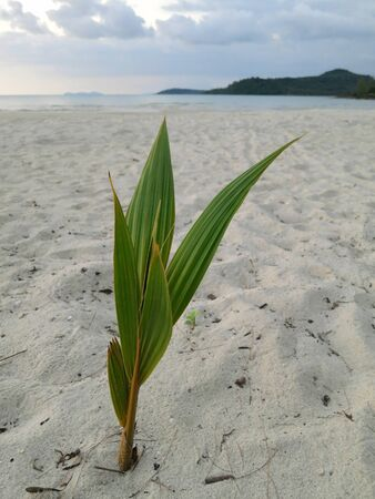 Germ of the palm trees on the shore of the ocean Stock Photo - 16654786