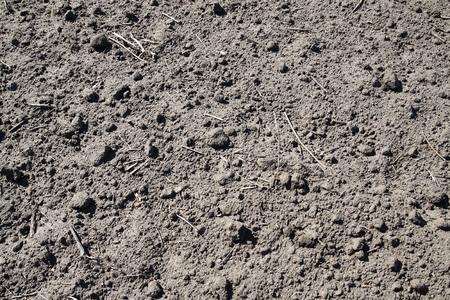 humus: Dry soil humus farmland in central Russia Stock Photo