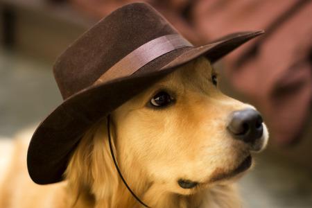 dogie: a cute golden retriever dog wearing a cowboy hat