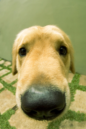 dogie: cute dogie Stock Photo