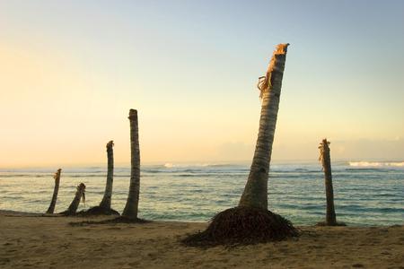 the aftermath: tsunami aftermath