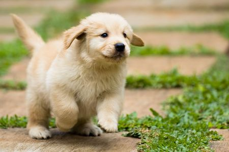frontyard: playful puppy running