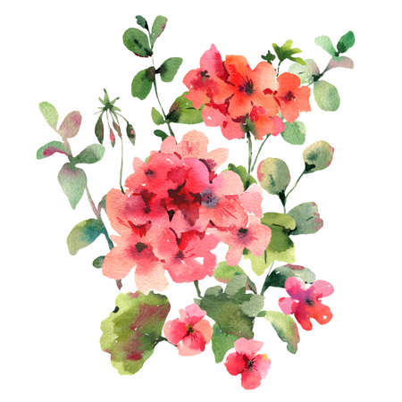 Flower Geranium, Pelargonium, Red Flowers, Natural Isolated Illustration, Spring Summer Greeting Card