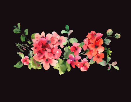 Flower Geranium, Pelargonium, Red Flowers, Natural Isolated Illustration on black background, Spring Summer Horizontal Frame