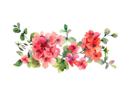 Flower Geranium, Pelargonium, Red Flowers, Natural Isolated Illustration, Spring Summer Horizontal Frame Stock Photo