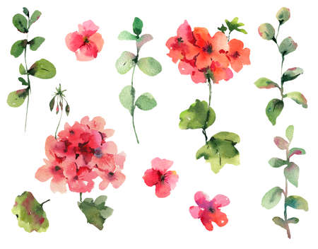 Set of  Flower Geranium, Pelargonium, Red Flowers, Natural Isolated Design Objects, Spring Summer Collection