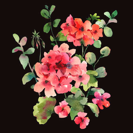 Flower Geranium, Pelargonium, Red Flowers, Natural Isolated Illustration on black background, Spring Summer Greeting Card