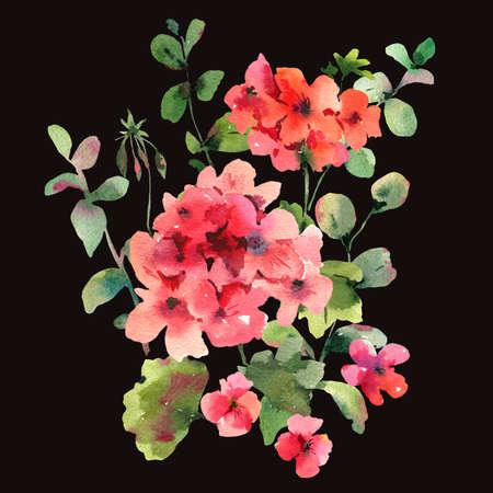 Flower Geranium, Pelargonium, Red Flowers, Natural Isolated Illustration on black background, Spring Summer Greeting Card