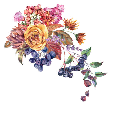 Watercolor vintage bouquet with chokeberry, ranunculus, autumn leaves, blue berries, lavender. Natural botanical greeting card isolated on white background. Banque d'images - 131415727