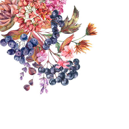 Watercolor vintage bouquet with chokeberry, ranunculus, autumn leaves, blue berries, lavender. Natural botanical greeting card isolated on white background.