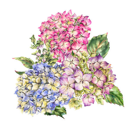 Watercolor blooming hydrangea greeting card, leaves, buds. Natural botanical floral collection isolated on white background, Summer Flowers