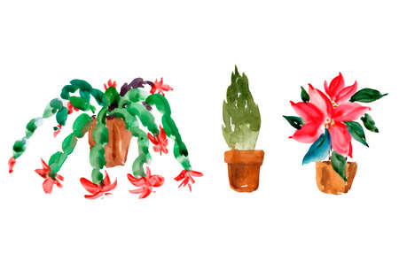 Watercolor Set of Christmas Houseplants, Christmas Cactus, Thanksgiving Cactus, Poinsettia, Thuja. Natural Collection Isolated on White Background for Holidays Design