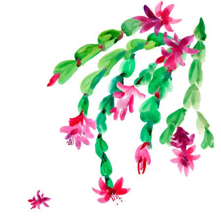Watercolor Christmas Cactus, Thanksgiving cactus, Blooming Flowers Schlumbergera Isolated on White Background, Pink Floral Zygocactus Illustration for Holidays Design Stock fotó