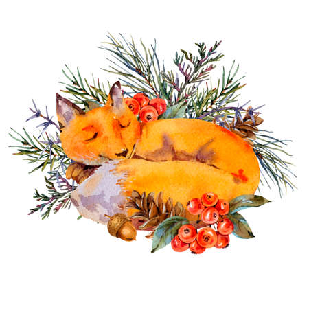 Watercolor woodland fox greeting card, Sleeping fox in the forest. Spruce branch, berries, pine cone and autumn leaves. Natural illustration isolated on white background Stock fotó