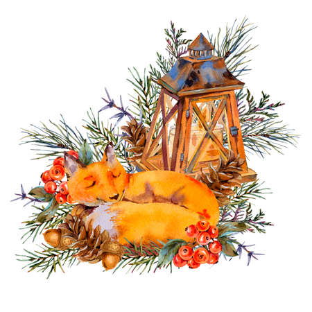 Watercolor woodland greeting card with rustic lantern, sleeping fox in the forest. Spruce branch, berries, pine cone and autumn leaves. Natural illustration isolated on white background