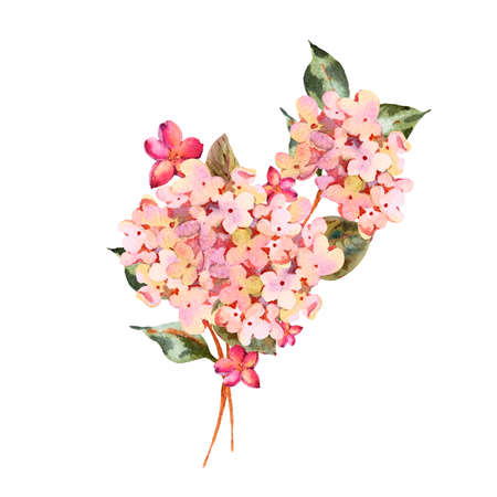 Watercolor pink blooming hydrangea with small wildflowers. Natural botanical floral collection isolated on white background, Summer Flowers