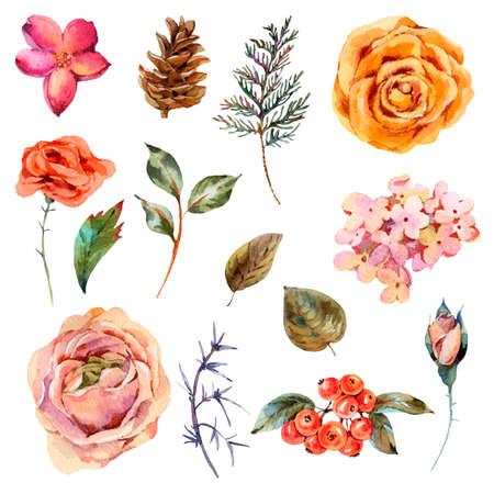 Watercolor vintage set of rose, hydrangea, pinecones, red berries and wildflowers. Natural botanical collection isolated on white background.