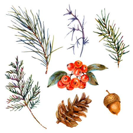 Watercolor winter set of spruce branches, pine cones, acorn, red berries. Natural collection isolated on white background.