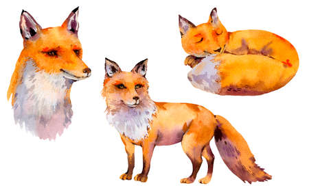 Set of watercolor woodland foxes, portrait fox, sleeping fox, Natural illustration isolated on white background. Watercolour animals. Stock fotó