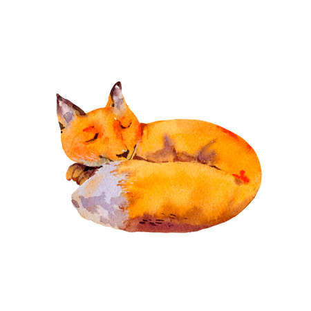 Watercolor woodland fox greeting card, Sleeping fox, Natural illustration isolated on white background