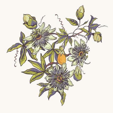 Collection naturelle florale vintage. Carte de voeux Passiflora, fleurs, feuilles. Ensemble d'objets de scrapbooking pour fête, mariage, anniversaire. Illustration vectorielle dessinés à la main