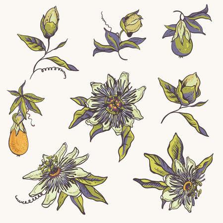 Collection naturelle florale vintage. Carte de voeux Passiflora, fleurs, feuilles. Ensemble d'objets de scrapbooking pour fête, mariage, anniversaire. Illustration vectorielle dessinés à la main Vecteurs