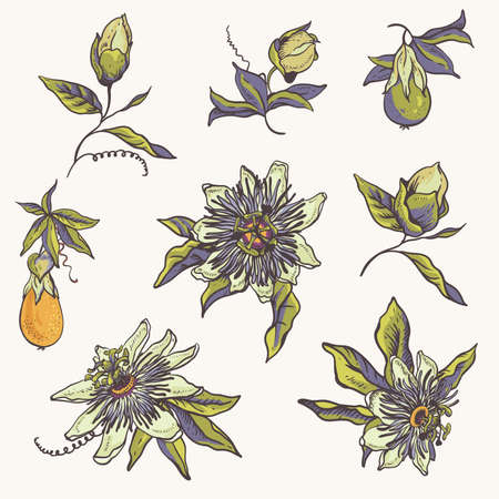 Vintage floral natural collection. Passiflora greeting card, flowers, leaves. Set of scrapbook objects for party, wedding, birthday. Hand drawn vector illustration